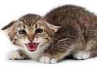 Адаптация и стресс у кошек