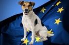 Правила ввоза животных в страны ЕС