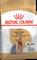 ROYAL CANIN (Роял Канин) Для взрослого йоркширкого терьера с 10 мес., Yorkshire Terrier 28 - фото 22130